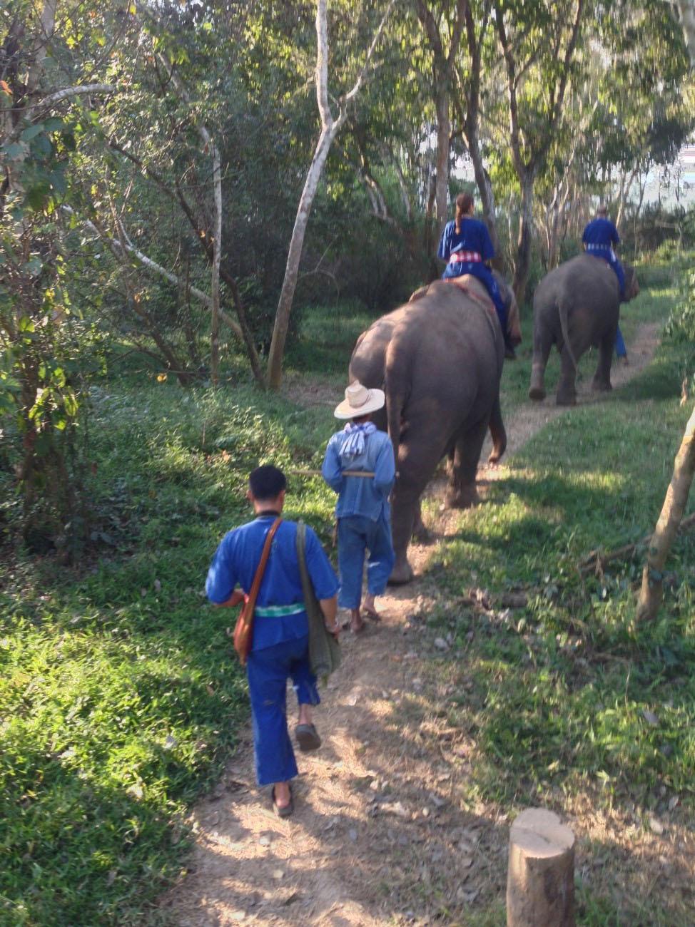 Polo. With Elephants?