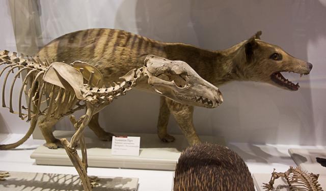 Extinct or Not?